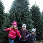 Day #332 – Hunting for a Christmas Tree