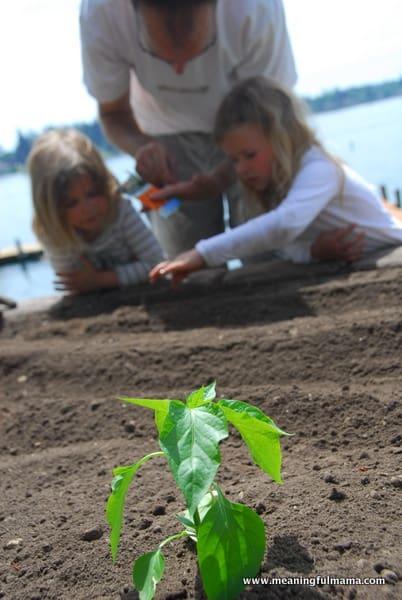 1-#planting a garden #2013-032