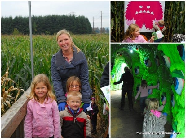 1-#pumpkin patch #corn maze #2013