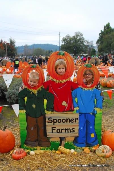 1-#pumpkin patch #corn maze #spooners-037