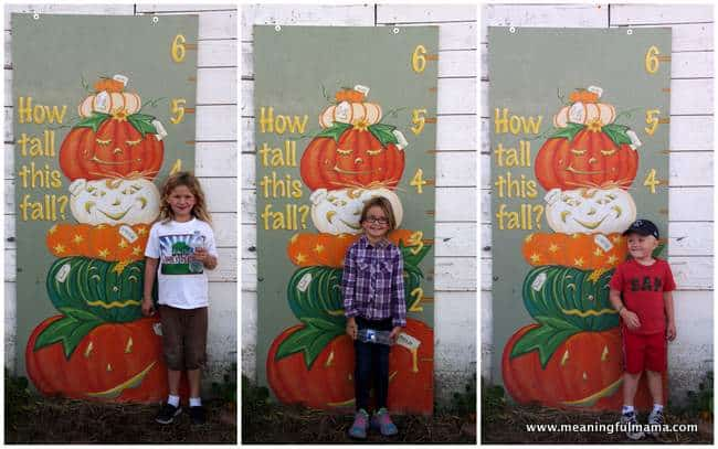 1-pumpkin patch schilter farms growth chart Oct 26, 2014, 9-41 AM