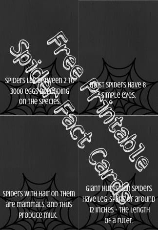 Spider Facts Cards - Free Printable