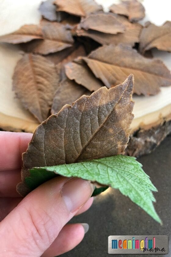 How to Make Easy Chocolate Leaves with a Video Tutorial